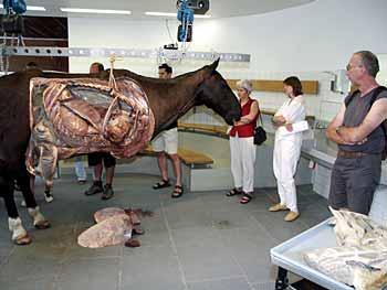 UZH - News - Wie sieht eine Kuh von innen aus?
